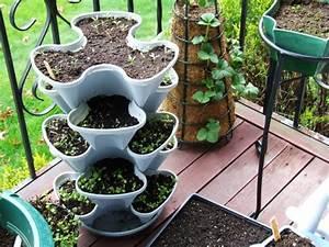 Garten Terrasse Gestalten : bio garten auf der eigenen terrasse einrichten ~ One.caynefoto.club Haus und Dekorationen