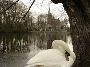 El Lago del Amor, el Minnewater, en Brujas