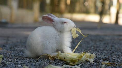 Kaninchen Haltung In Haus Und Garten  Zooroyal Magazin