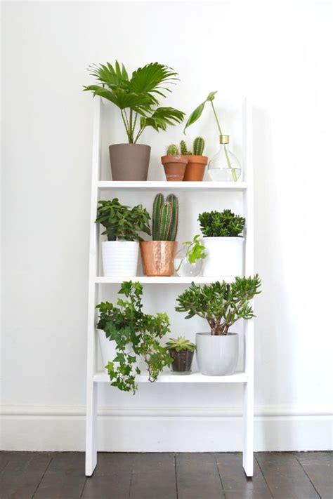 plante pour cuisine une étagère murale pour exposer les plantes coup de