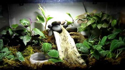 Live plant salamander terrarium tank - YouTube