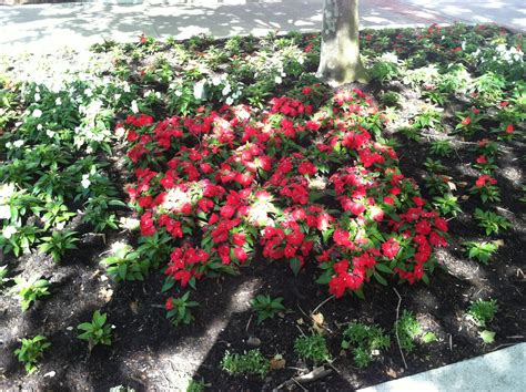 flower bed beautiful flower beds pictures beautiful flowers