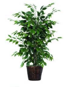 best plant reviews top picks furniture decor