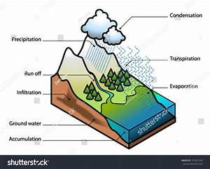 Water Cycle Showing Evaporation Transpiration Condensation