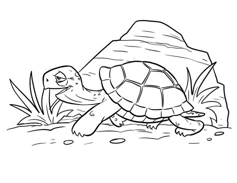 42 Image Of Free Turtle Coloring Pages Gianfredanet