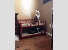 Best 25+ Dog bunk beds ideas on Pinterest Dog beds, Dog