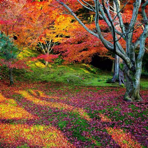 4k Nature Wallpaper Spring Japan (45+ Images