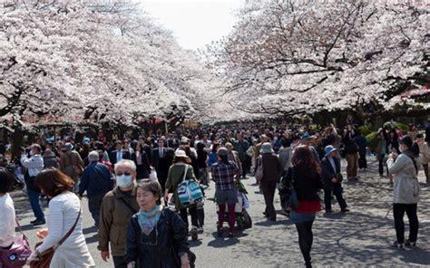 Pemandangan bunga sakura bermekaran ini jadi daya tarik baru di surabaya. 7 Spot Paling Populer Lihat Bunga Sakura di Jepang