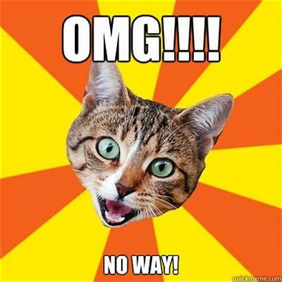 Omg Way Meme Cat Memes Funny Really