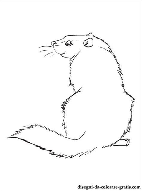 disegni  marmotta americana da colorare disegni da colorare gratis