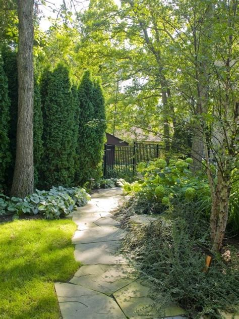 privacy planting small yard privacy house plants yard pinterest gardens privacy hedge and tall shrubs