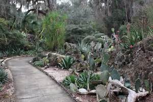Kanapaha botanical gardens picture of gainesville for Gainesville botanical gardens