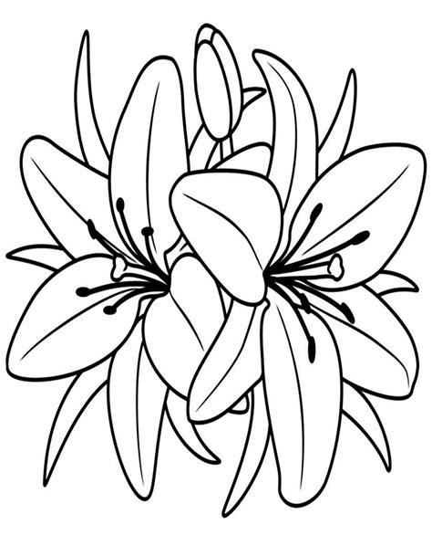 disegni  fiori da colorare foto  nanopress donna