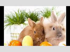 Bild Zu Ostern ideen YouTube