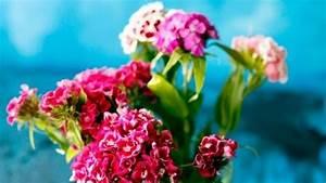 Schnittblumen Länger Frisch : schnittblumen l nger frisch mit schnaps frag mutti ~ Watch28wear.com Haus und Dekorationen