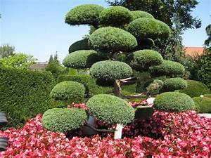 Baum Vorgarten Immergrün : kostenlose foto baum natur blume fr hling gr n ~ Michelbontemps.com Haus und Dekorationen