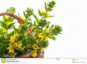 Gelbe Sommerblumen Mehrjährig : sch ne gelbe sommerblumen lizenzfreies stockbild bild 31151476 ~ Frokenaadalensverden.com Haus und Dekorationen
