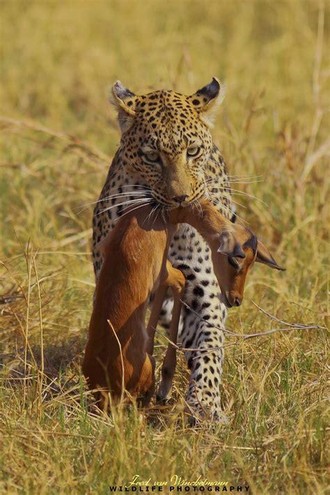 fred von winckelmanncreating animal awareness