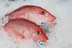We Can All Agree on Healthy Red Snapper Populations in the ...