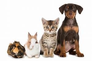 Pflegeleichte Haustiere Wohnung : haustiere in der wohnung welche sind erlaubt otto immobilien journal ~ Yasmunasinghe.com Haus und Dekorationen