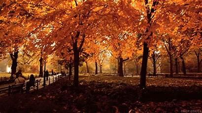 Autunno Autumn Leaves Luna Piena Settembre Fall