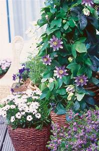 Künstliche Blumen Für Balkonkästen : der sonnen balkon blumen f r balkonk sten k bel und co ~ A.2002-acura-tl-radio.info Haus und Dekorationen