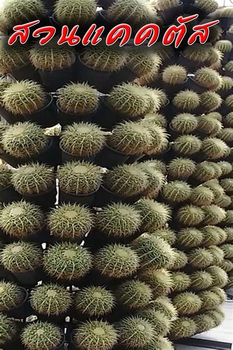 แคคตัส กระบองเพชร สวนแคคตัส สวนนงนุช พัทยา - 2021