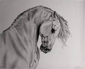 Horse sketch..amazing | Art | Pinterest | Horse, Sketches ...