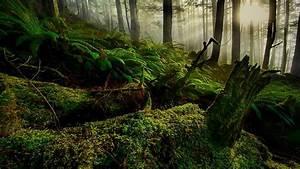 Hd, Wallpaper, Nature, Landscape, Ferns, Forest, Trees