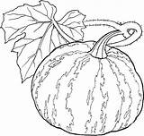 Coloring Vegetables Pages Gourd Adult Vegetable Fruit Fruits Basket Veggies Printable Coloriage Printables Related Getcolorings Legumes Adults Excellent Getcoloringpages sketch template