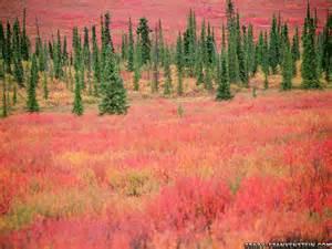 Fall Autumn Desktop Backgrounds Alaska