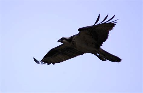 edupic birds of prey images