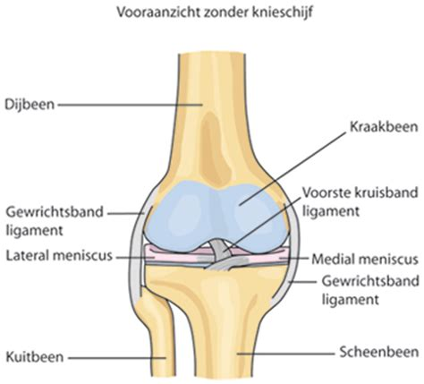 Pijn in het bovenbeen - centrum evers