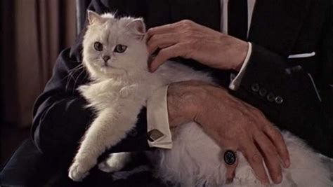 Top 10 Movie Cats  Pretty Clever Films