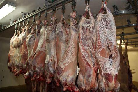 chambre froide boucherie abattage groupement des eleveurs girondins