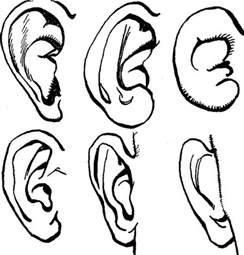 Simple Drawings of Ears On Head