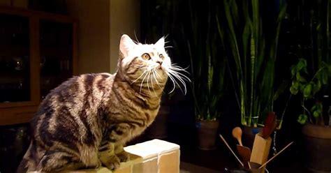 Funny Cats Stalking Cat Vs Ufo İzlesenecom