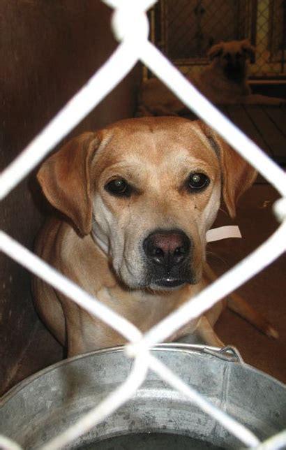 dogs journey  pima animal care center pets
