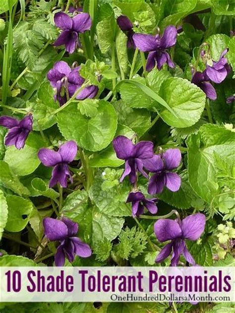 best perennials for shade 17 best images about shade garden on pinterest gardens shade plants and deer