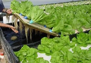 Nft Aquaponics   Advantages Of Aquaponic Farming