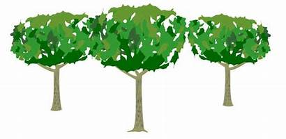 Tree Lawn Clipart Care Clipartfest Landscaping