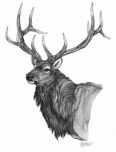 Beautiful pencil drawing of a bull elk | deer | Pinterest ...