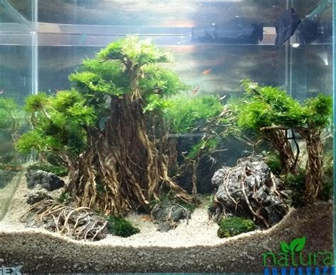 freshwater aquascaping designs pin by stephanus mardianto on aquascape