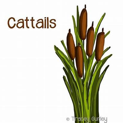 Cattails Cattail Clipart Clip Graphic Plant Marsh