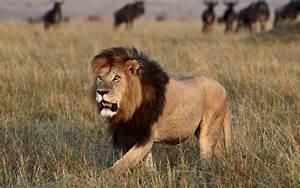 African Lion vs Nile Crocodile | The World of Animals