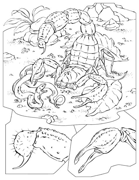 national geographic kids coloring pages coloring home