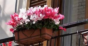 Blumentopf Balkongeländer Hängen : verboten blumenk sten am balkongel nder ~ Buech-reservation.com Haus und Dekorationen