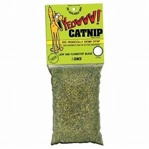 Herbe à Chat : sachet d 39 herbe chat herbe chat catnip yeowww ~ Melissatoandfro.com Idées de Décoration