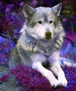 Beautiful Native American Wolf