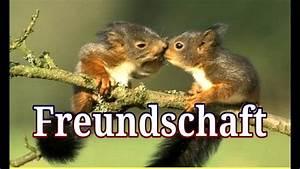 Lieblingsmensch Sprüche Bilder : 11 sch ne spr che ber freundschaft julebuergerfee youtube ~ Eleganceandgraceweddings.com Haus und Dekorationen